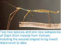 https://sciencythoughts.blogspot.com/2014/12/two-new-species-and-one-new-subspecies.html