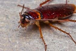 Ο CEO της Google, Sundar Pichai, πάντα ξεκινάει τις παρουσιάσεις του με αυτή την ιστορία.  Σε ένα εστιατόριο μια κατσαρίδα εμφανίζεται από ...