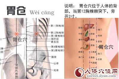 胃倉穴位 | 胃倉穴痛位置 - 穴道按摩經絡圖解 | Source:xueweitu.iiyun.com
