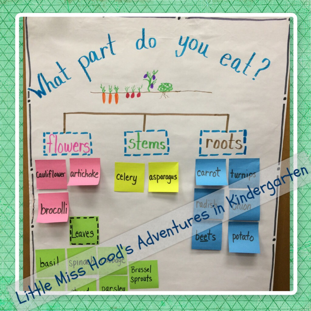 Little Miss Hood S Adventures In Kindergarten