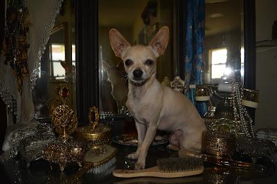 tiny boudoir dog