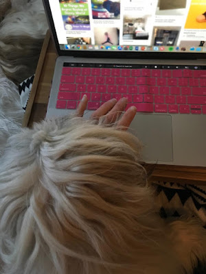 Trying to work with a puppy