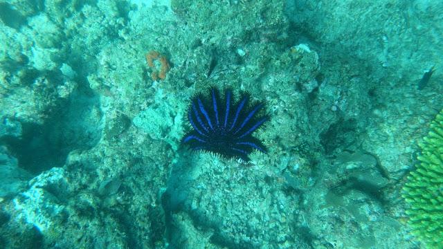 Korallen Phi Phi Island