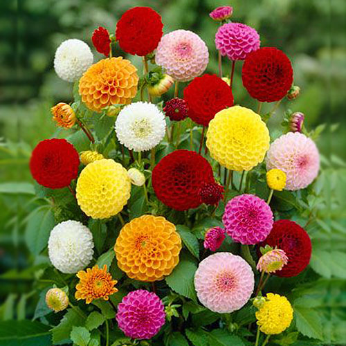 Judul Lagu Bunga Dahlia Masruri Mahali