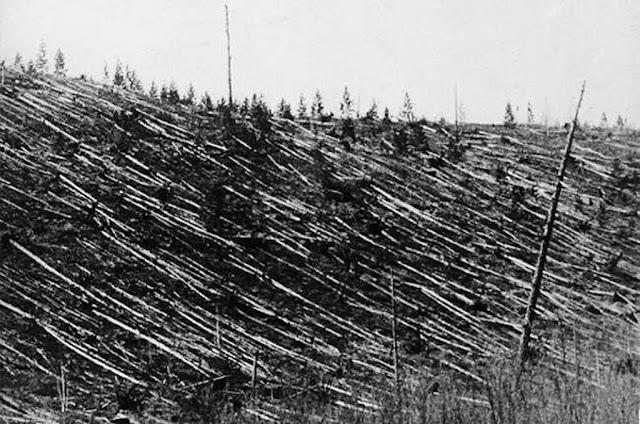Floresta de Tunguska, na Sibéria, após o impacto em 1908