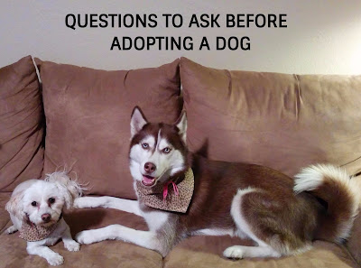 Before you adopt a new dog, ask these important questions.