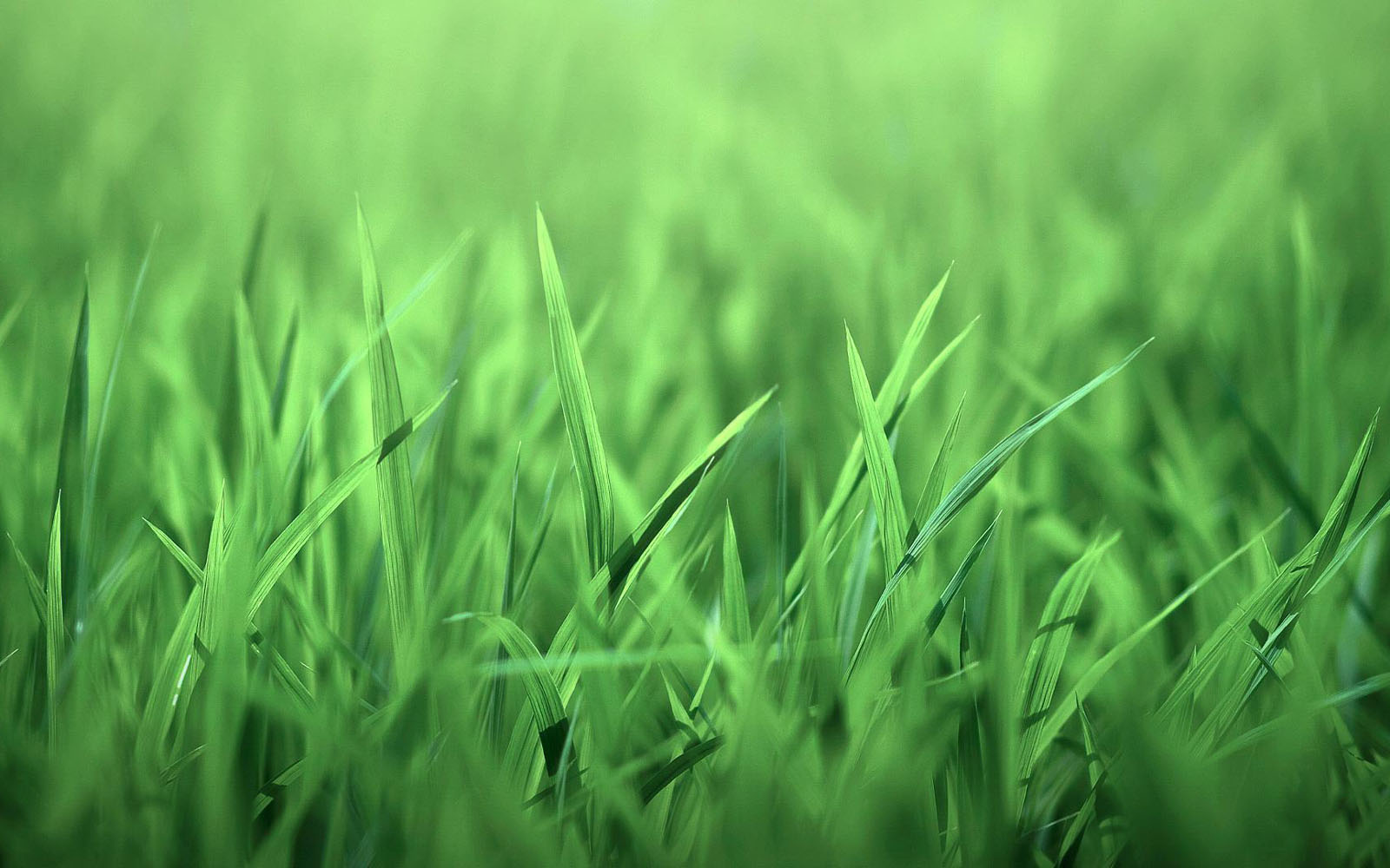 Wallpapers Grass Wallpapers