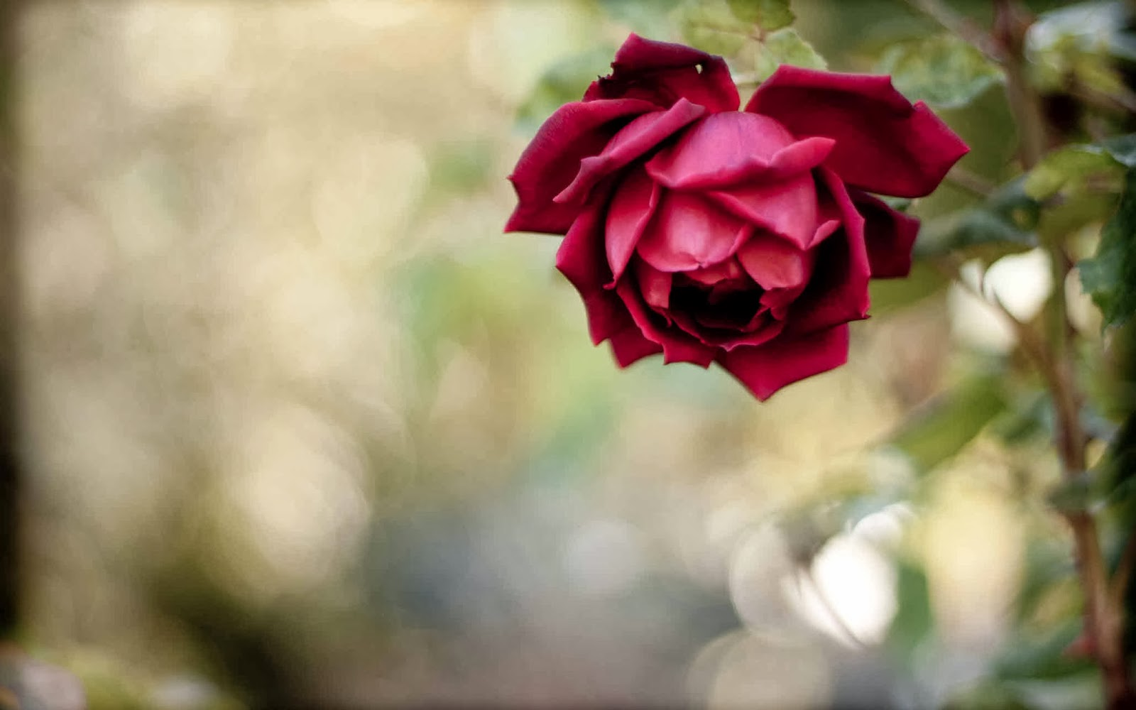 hoontoidly: Roses Tumblr Background Quotes ImagesRed Roses Tumblr Photography