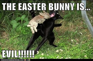 bunny attacking cat