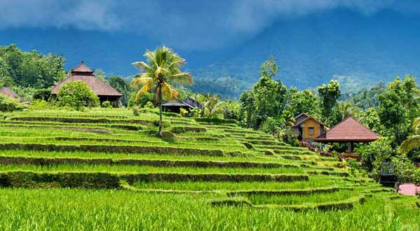 Tempat Wisata di Ubud Bali yang Mengagumkan