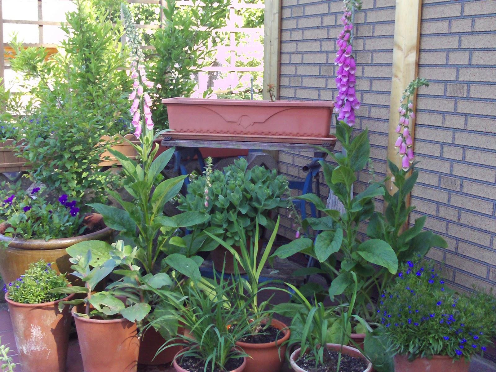 terrassengestaltung k belpflanzen gartenelfe. Black Bedroom Furniture Sets. Home Design Ideas