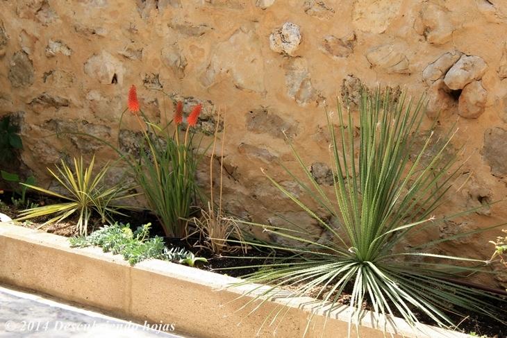 Descubriendo hojas jardinera xer fila en mi jard n for Que plantas poner en una jardinera