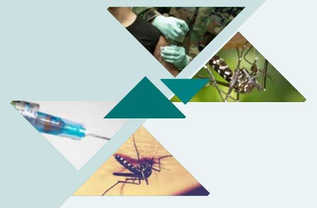 Mosquito da dengue: Anvisa lança cartilha de combate ao Aedes aegypt