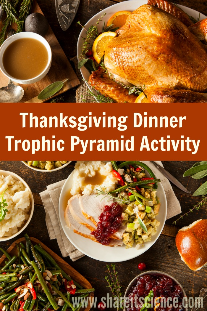 Materials For Thanksgiving Dinner Trophic Pyramid