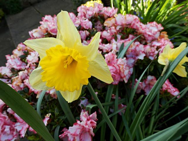 Spring flowers in Cornwall