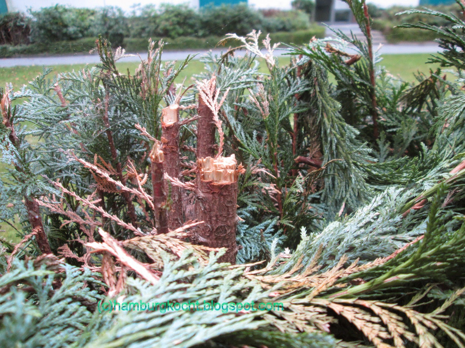 hamburg kocht der garten im august september kahlschlag. Black Bedroom Furniture Sets. Home Design Ideas