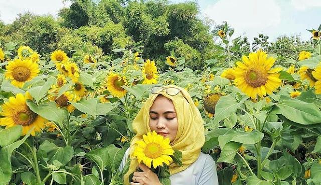 Abadikan momen indah kamu di kebun bunga matahari kediri