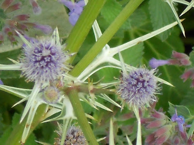 Purple Thistle and flower image