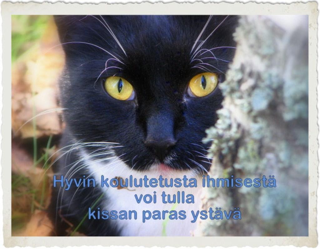 Onnea Kissa