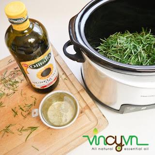 chiết xuất tinh dầu hương thảo tại nhà