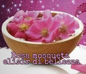 rosa mosqueta elisir di bellezza