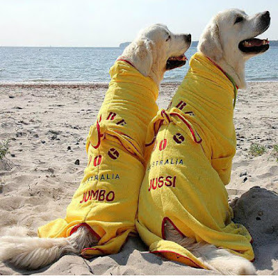 SurfDog-Australia-Dog-Drying-Coats