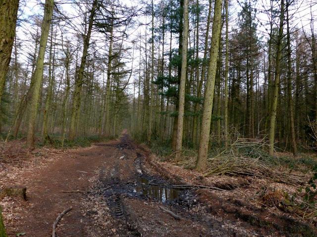 Depression Alltag Rückzug Ruhe Wald Auszeit Überforderung