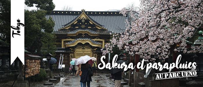 Sakura et parapluies