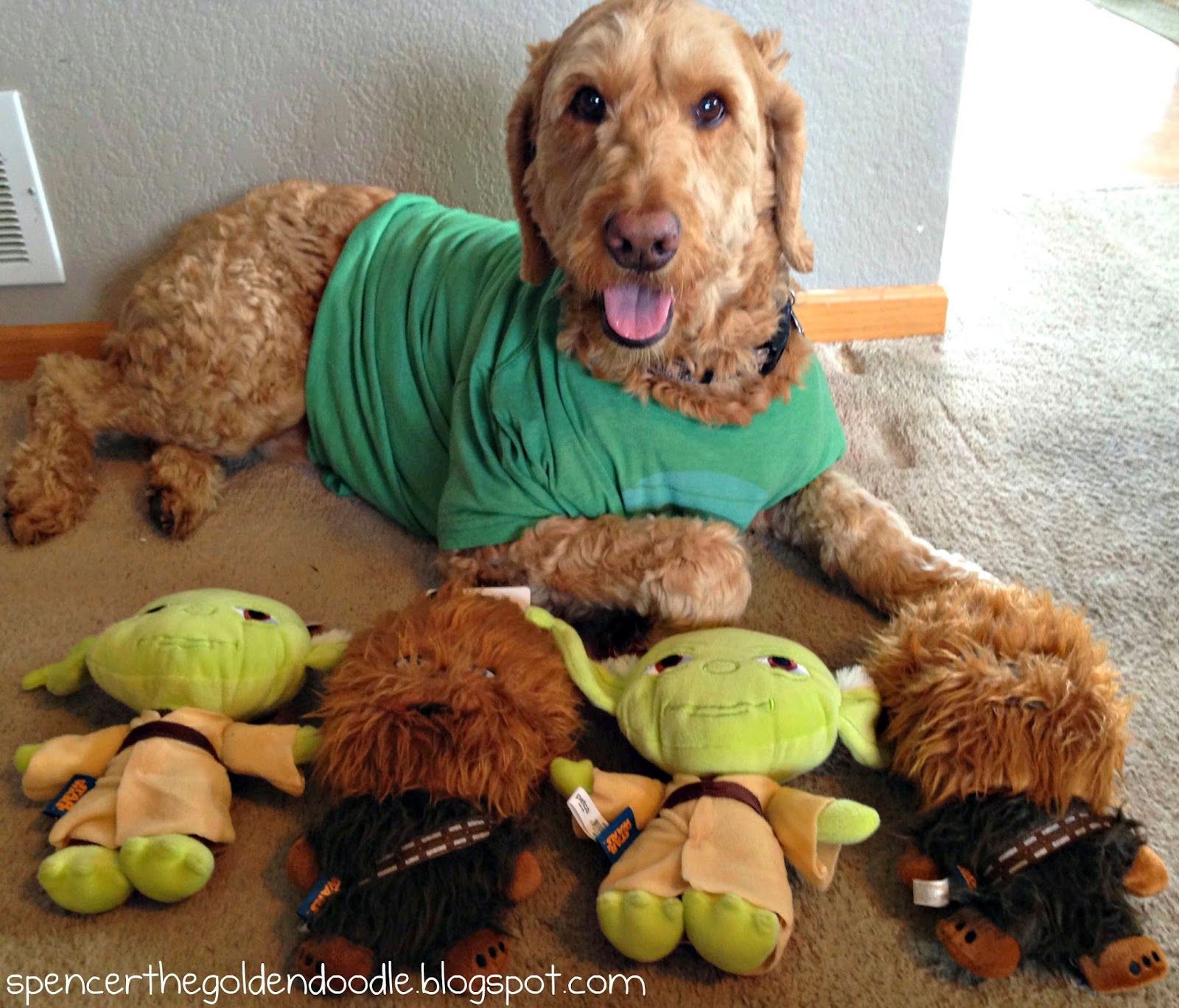May The 4th Be With You Dog: Spencer The Goldendoodle: May The Fourth Be With You