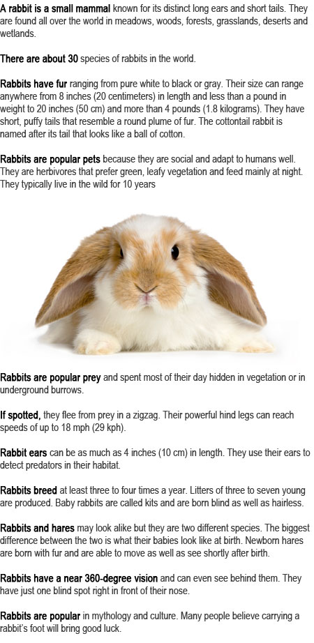 Rabbit Facts For Kids Childhood Education