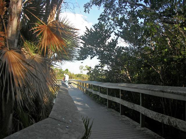 Mahogany Hammock Trail Everglades, Florida