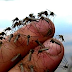 Nyamuk Selalu Tepat Sasaran Dalam Minum Darah Kalian Baca ini Biar Ngerti