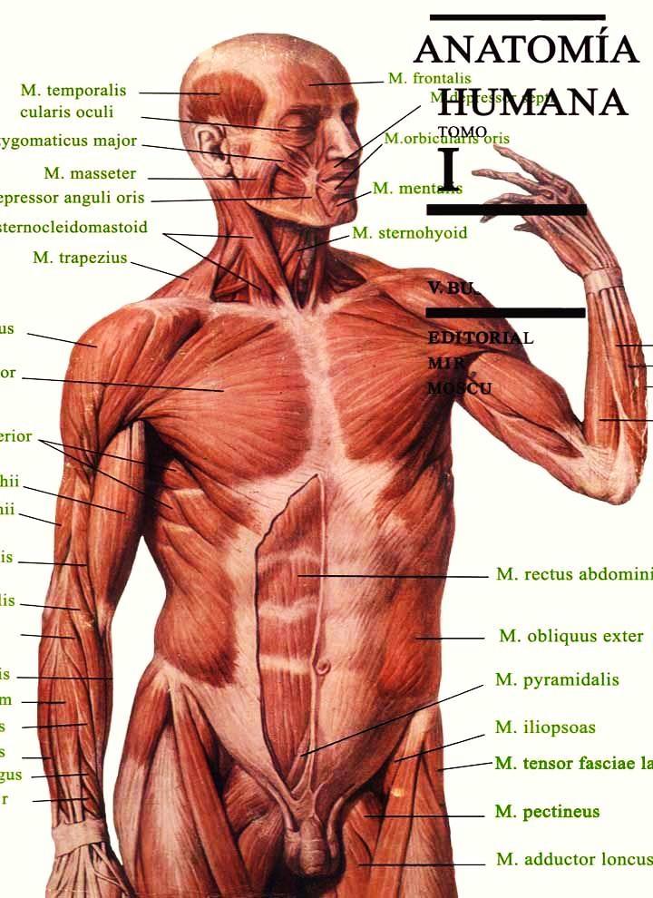 Anatomía humana, Tomo I - M. Prives | LibrosVirtual