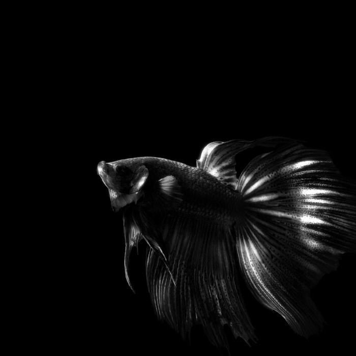 Индонезийский фотограф. Heru Suryoko