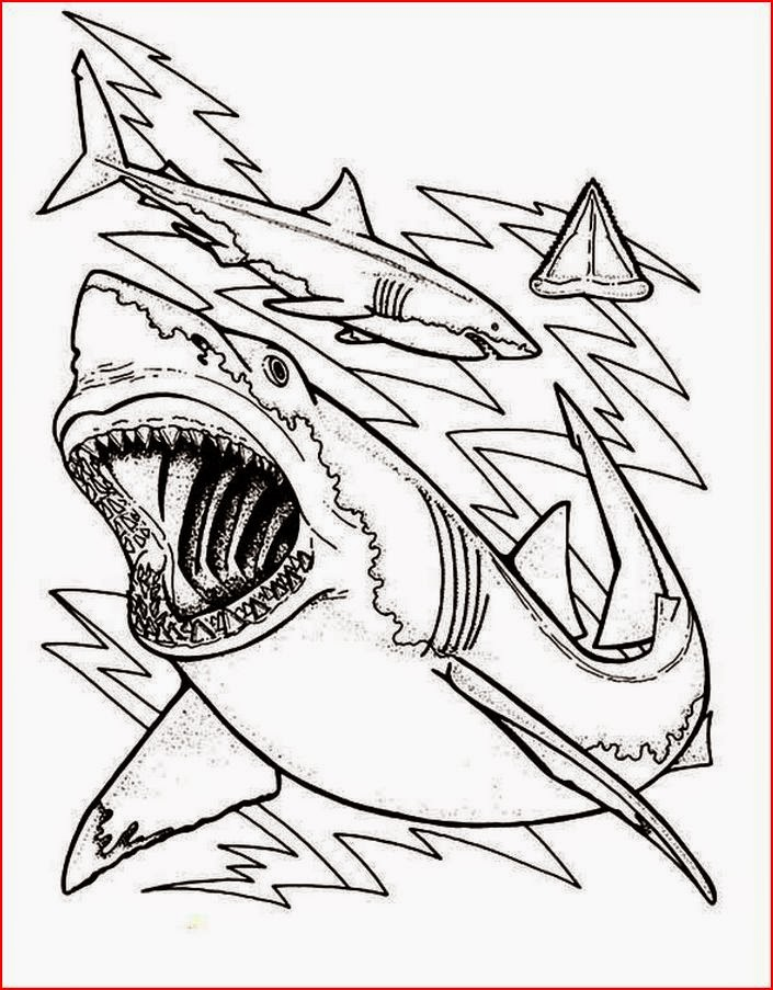 Coloring Pages Shark Coloring