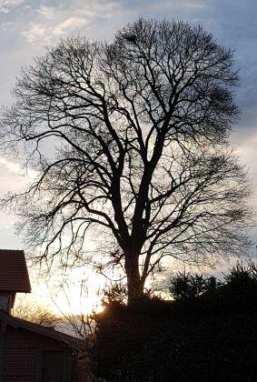 Blattloser Baum im Abendlicht