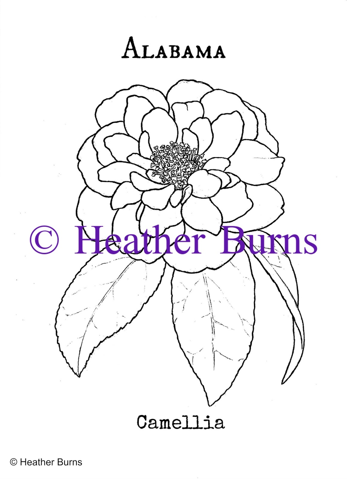 State Flower Coloring Book: Alabama State Flower, Camellia