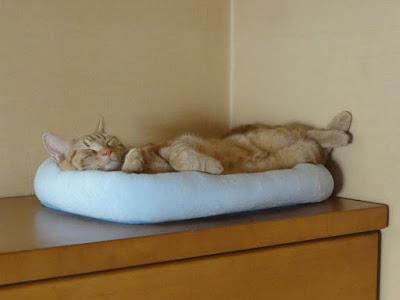 タンスの上の猫ベッドで足をクロスさせて寝ています。