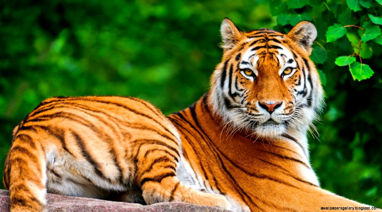 Full Hd Animals Wallpapers | Wallpapers Gallery  Full