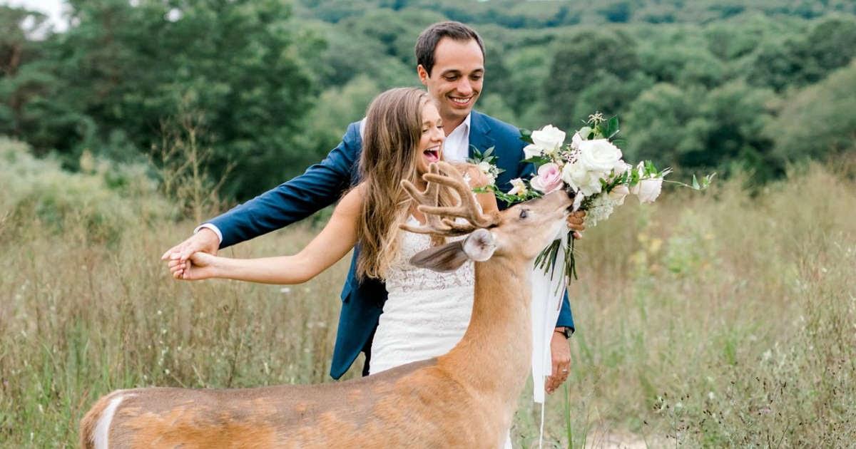 Wild Deer Crashed Wedding Photoshoot To Eat The Bride's Bouquet