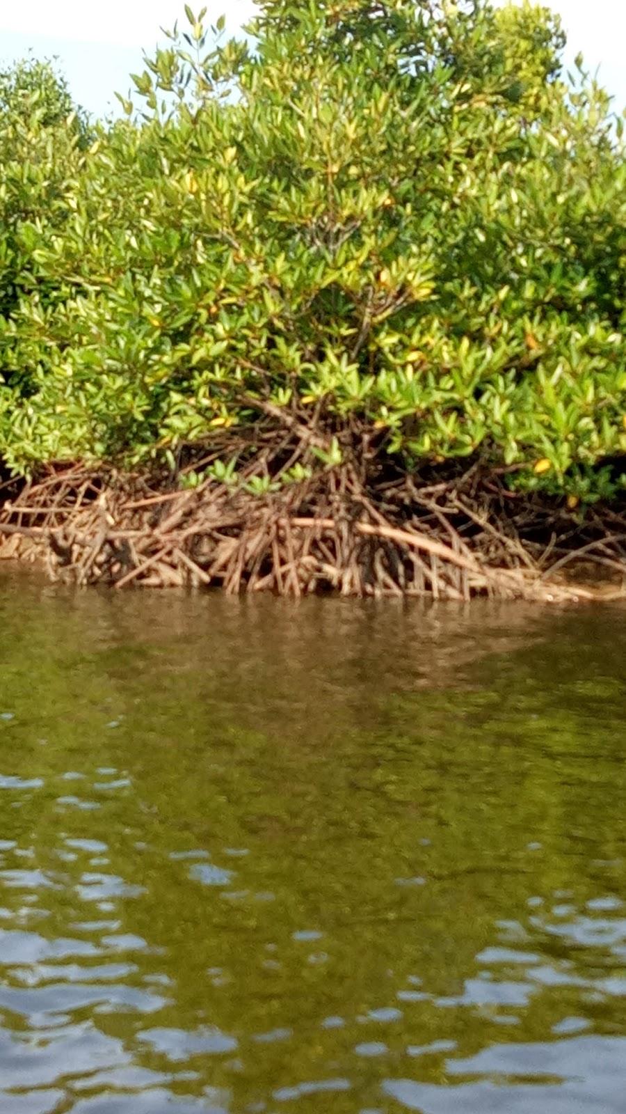 Sebutkan Manfaat Hutan Mangrove : sebutkan, manfaat, hutan, mangrove, KEHUTANAN:, Dampak, Kerusakan, Hutan, Mangrove, Terhadap, Kehidupan