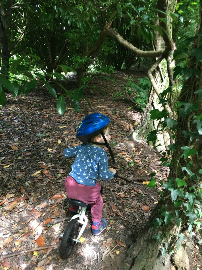 Our-weekly-journal-7-august-2017-trains-and-bikes-toddler-on-bike-in-woods