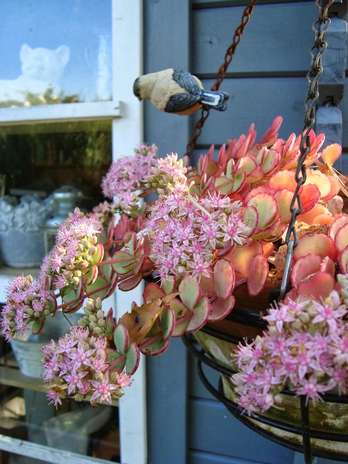 Passionn ment jardin petit tour au jardin ce matin - Petit jardin romantique tours ...