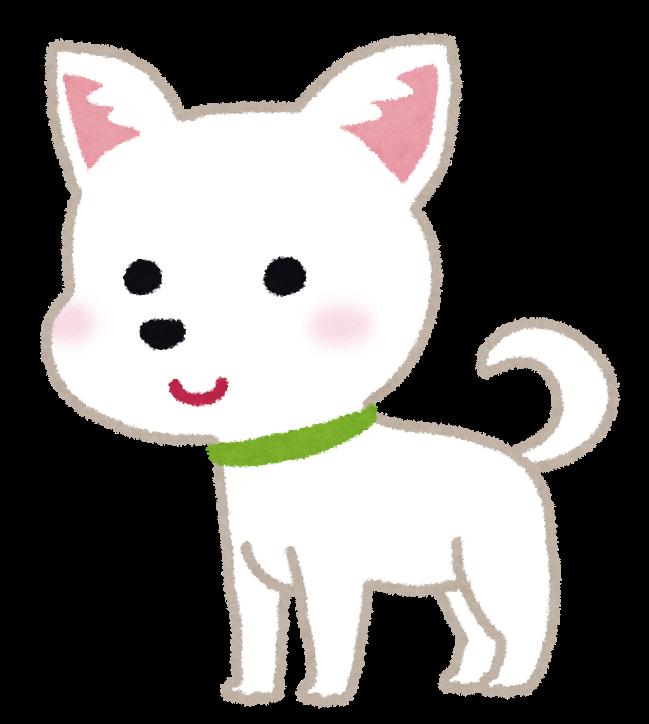 チワワのイラスト犬 かわいいフリー素材集 いらすとや