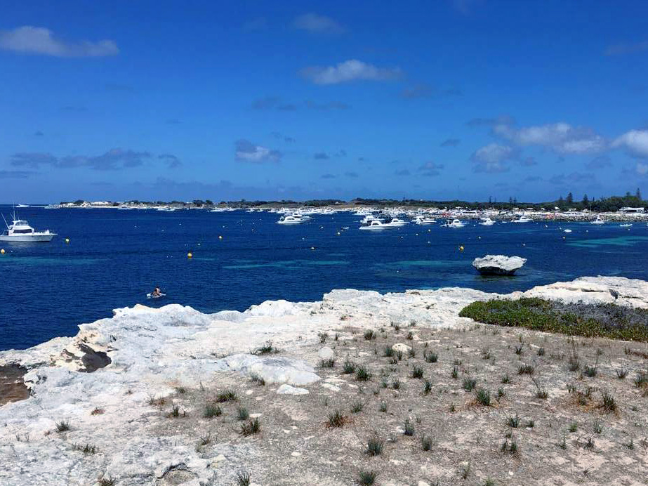 quokkas rottnest island