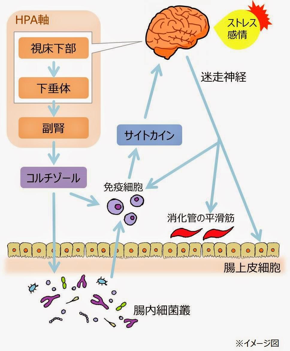 Dr.西澤の栄養療法コラム: 腸とストレス-腸脳相関-