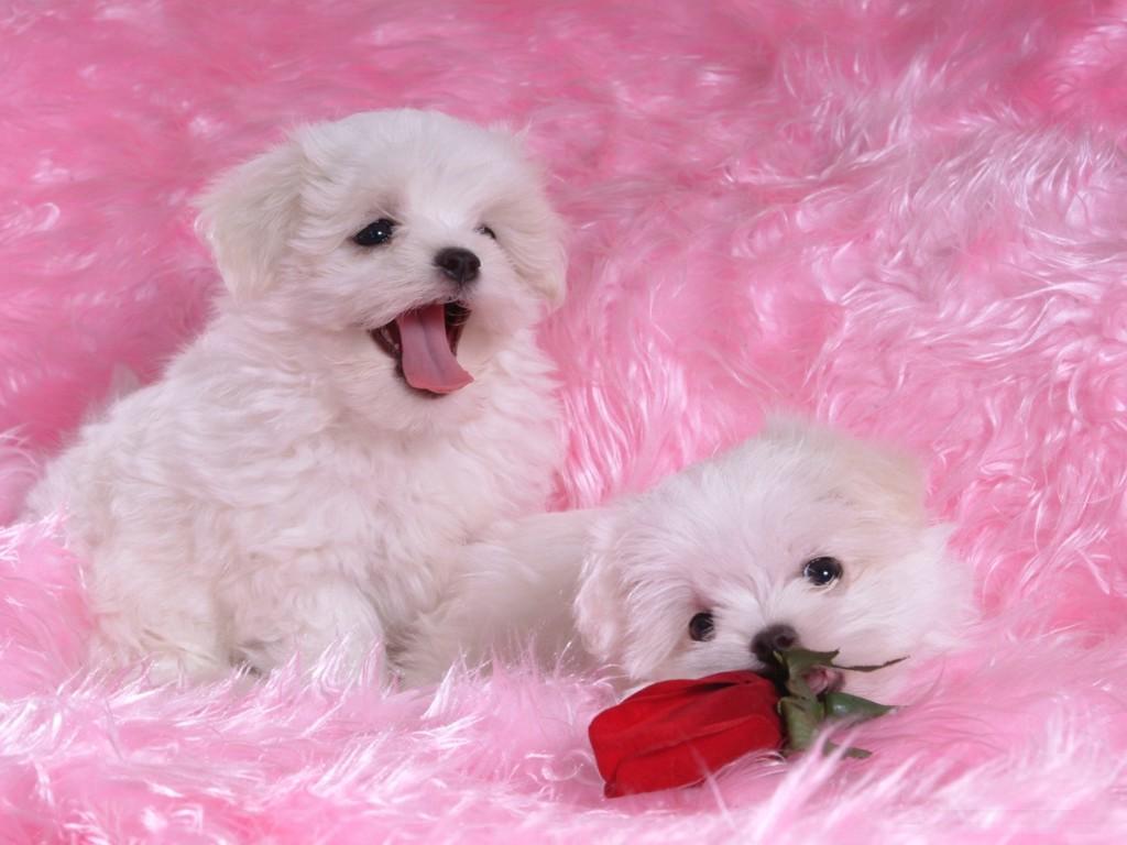 nice puppies wallpaper hd - photo #15