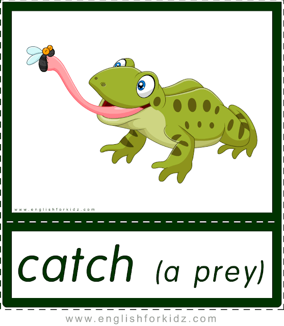 Catch a prey (frog) - printable animal actions flashcards for English learners