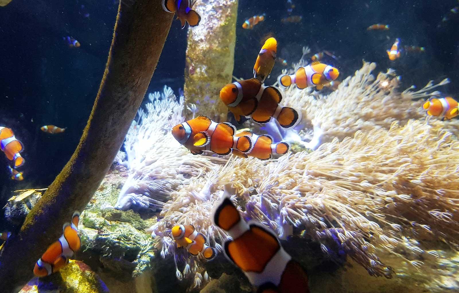Journée Boulogne-sur-mer Nausicaa