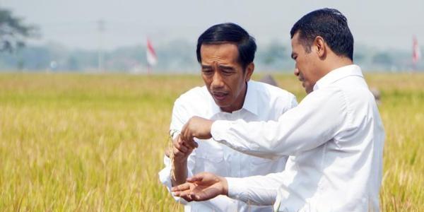 Hanya Dinikmati 2 Persen Petani, Pemerintah Putuskan Cabut Subsidi Benih